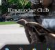 Мобильное приложение Краснодар Club