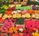 Интернет-магазин букетов, цветов и подарков