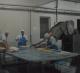 Мясоконсервное предприятие с бойней