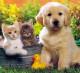 Интернет - магазин питания и средств по уходу для животных