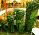 Интернет-магазин искусственного озеленение