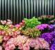 Салон цветов в центре Москвы
