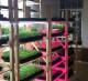 Производство зелени со сбытом в ресторанах СПБ