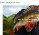 Интернет-магазин по оптовой продаже товаров для рыбалки и отдыха