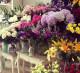 Магазин цветов в Красногорске без конкурентов