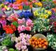 Цветочная база в САО