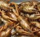 Оптовая база морепродуктов