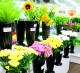 Цветочный магазин  на площади трех вокзалов
