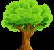 WoodLes -производство дубового шпона